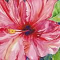 Hibiscus by Maritza Bermudez