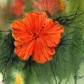 Hibiscus by Marsha Elliott