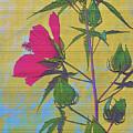 Hibiscus On Brick by Sally Falkenhagen