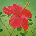 Hibiscus by Ruth  Housley