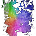 Hibiscus S D Z 2 Cool Rainbow 3 Dimensional by Di Designs