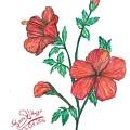 Hibiscus by Sara Alhajeri