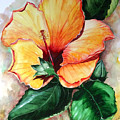 Hibiscus  Sunny by Karin  Dawn Kelshall- Best