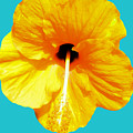Hibiscus Test 4 by Heather Joyce Morrill
