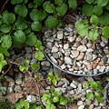 Hidden Bucket Of Rocks by Deborah Brown