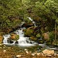 Hidden Falls by Scott Read