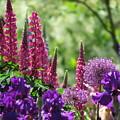 Hidden Garden by Dawn  Wendell