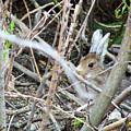 Hidden Hare by Bob W Brown