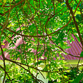 Hidden In The Garden by Gary Richards