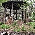 Hidden In The Woods by Ally Lovensheimer