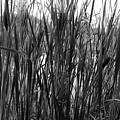 Hidden Lake by Steve Bell