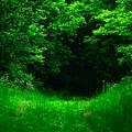 Hidden Meadow by Renee Seastrom