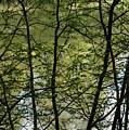 Hidden Pond Natural Fence by LeeAnn McLaneGoetz McLaneGoetzStudioLLCcom