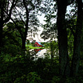 Hidden Pond by Neal Nealis
