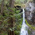 Hidden Rainforest Treasure by Carol Groenen