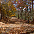 Hidden Road by William Norton