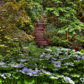 Hidden Stairs by David Patterson