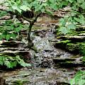 Hidden Stream by Wesley Farnsworth