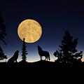 Hidden Wolves by Shane Bechler