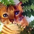 Hide And Seek Cat by George Markiewicz