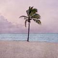 Higgs Beach - Key West by Kim Hojnacki