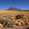 High Altitude Puna Grasslands And Miniques Volcano Chile by James Brunker