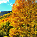 High Country Aspens by Ray Mathis