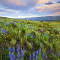 High Desert Spring by Mike  Dawson