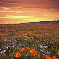 High Desert Sunset Serenade by Lynn Bauer