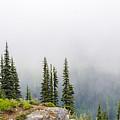 High Forest On Mt. Rainier by Lynn Hansen