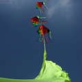 High Hopes by Angel  Tarantella