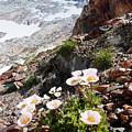 High Mountain Flowers by Elizabetha Fox