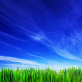 High Resolution Image Of Fresh Green Grass And Blue Sky by Michal Bednarek