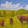 Highland Cattle Pasture by Veikko Suikkanen
