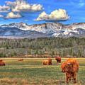 Highland Colorado by Scott Mahon
