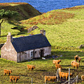 Highland Cottage With Highland Cattle by John McKinlay