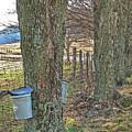 Highland County Va Virginia - Monterey - Mcdowell - Maple Harvest by Dave Lynch