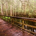 Highlands Hammock by Debra and Dave Vanderlaan