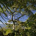 highlands in Costa Rica 2 by Rudi Prott