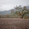 Highway Oak by Derek Selander