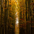 Highway To Heaven by Martin Podt
