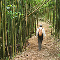 Hiker In Bamboo Forest by Greg Vaughn - Printscapes
