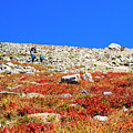 Hikers And Autumn Tundra On Mount Yale Colorado by Steve Krull
