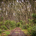 Hiking On Rangitoto New Zealand by Joan Carroll