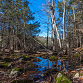 Hiking Reflections At Wompatuck State Park by Brian MacLean