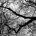 Hiking Trail Fall 2017 7 Bw by Mary Bedy