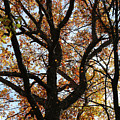 Hiking Trail Fall 2017 8 by Mary Bedy