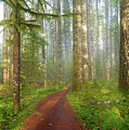 Hiking Trail In Washington State Park by David Gn