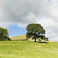 Hills Of Sedbergh Cumbria by Joseph Clemson