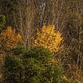 Hillside Autumn by Marv Vandehey